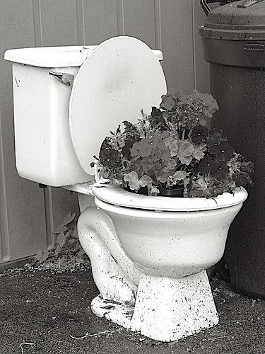 toiletflowerpot